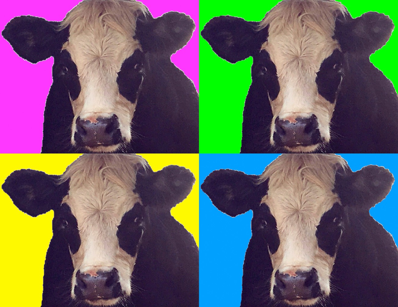 2017-07-06 cow collage gall