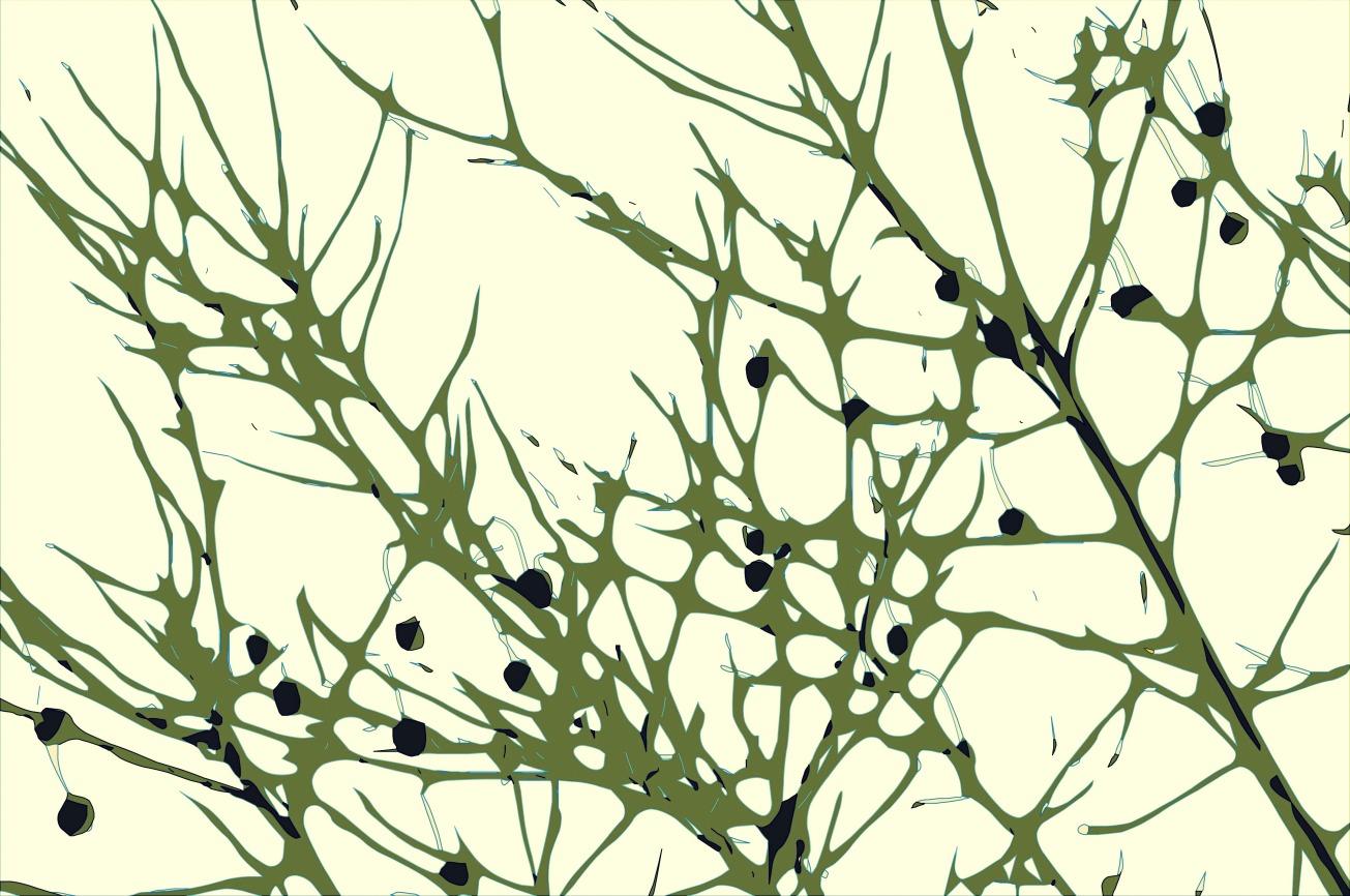 FullSizeRender-003 gall bramble berries