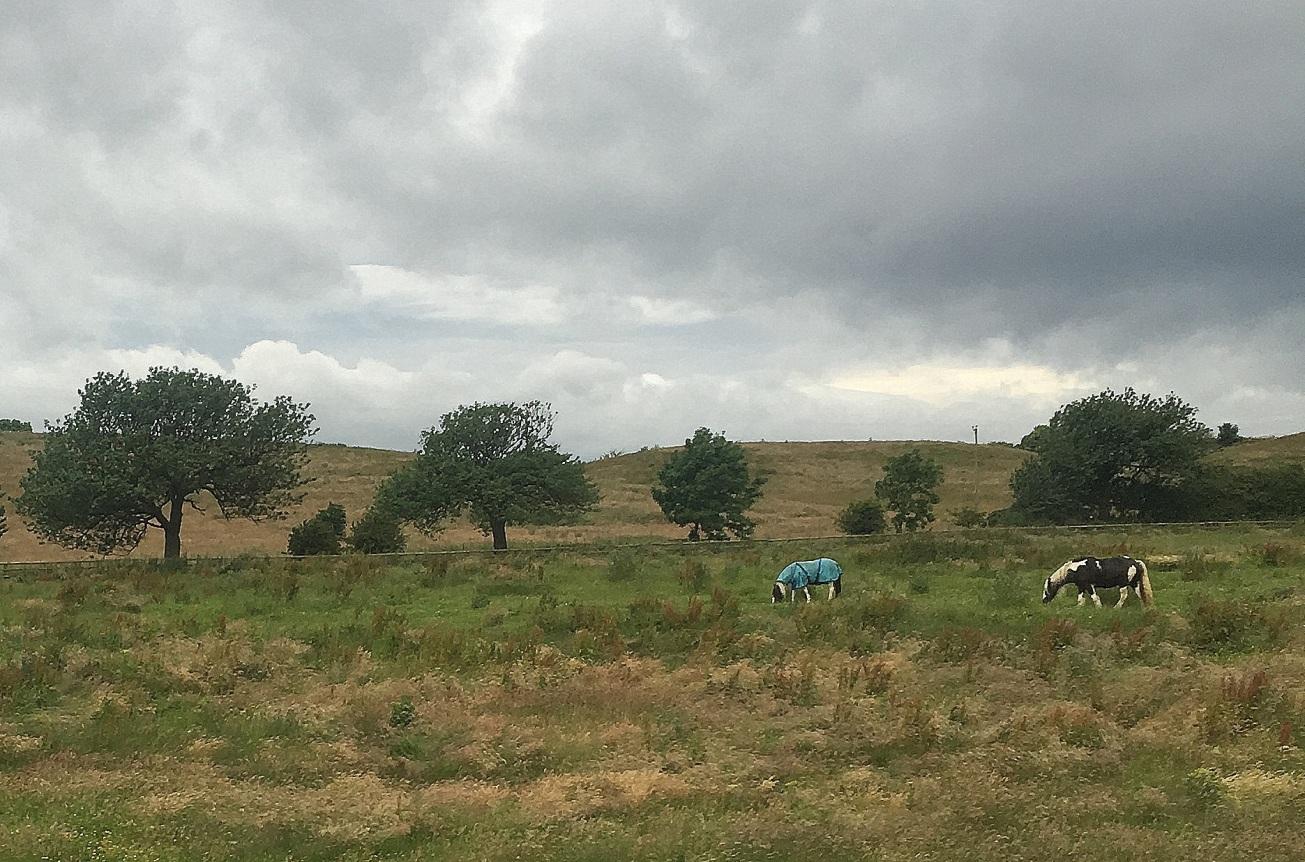 IMG_8845-005 gall horses jacket