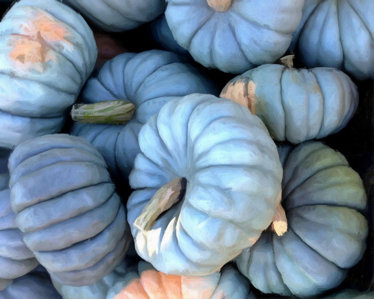 Sketched 0096 pale pumpkins g gall