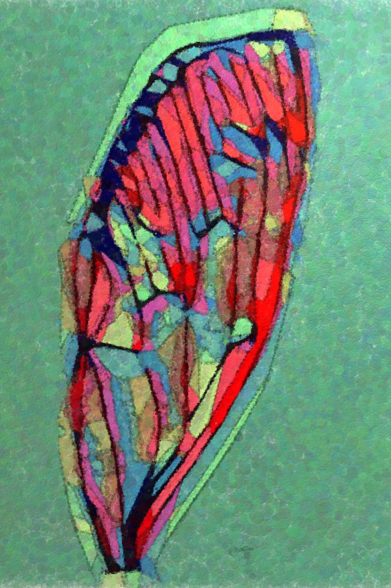 IMG_5570 cicada wing green gall