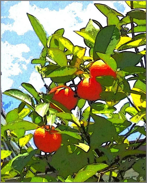 IMG_5931-001 vintage orange tree gall